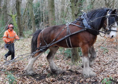 Big Lad working in woodland - credit Green Estates